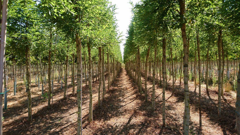bomen-plants.jpg