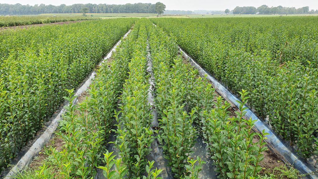 kwekerij-plants.jpg